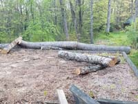 Sacrificing some trees in the service of a custom tan and green basketball court in Londonderry, NH.
